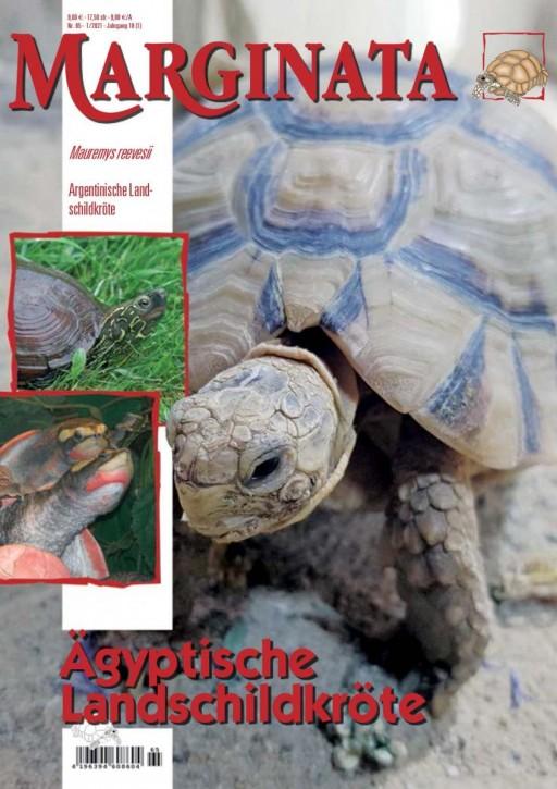 MARGINATA 65: Ägyptische Landschildkröte